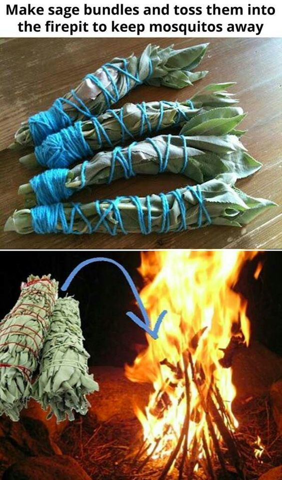 Use sage as a mosquito repellant