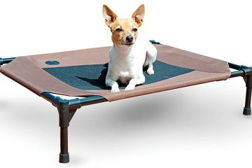 Best Camping Chairs For Your Dog
